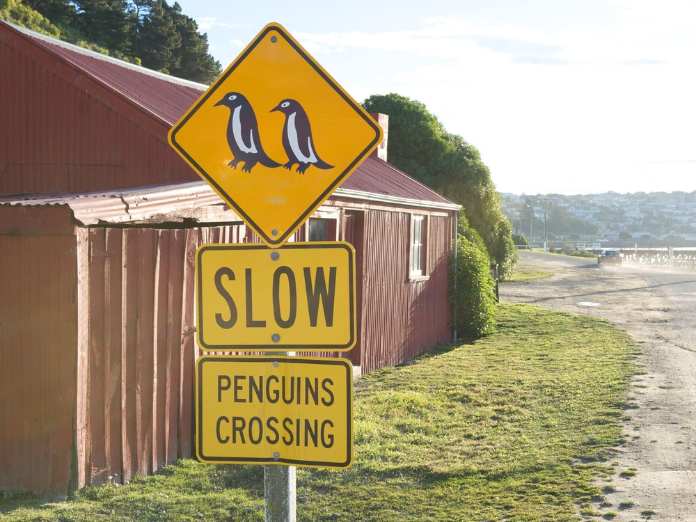 Watch out for penguins on the Otago Peninsula!