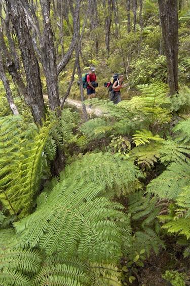 1192 Abel Tasman Kayaks 1576020462 ATK walking in park org