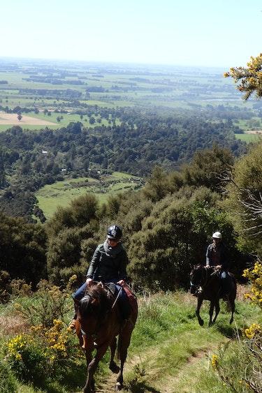 3784 Peel Forest Lodge Horse Treks 1538286156 PA311295