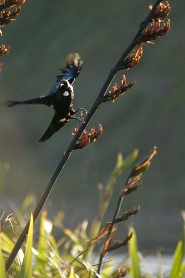 Nz kapiti island bird flower solo partner see and do easy going