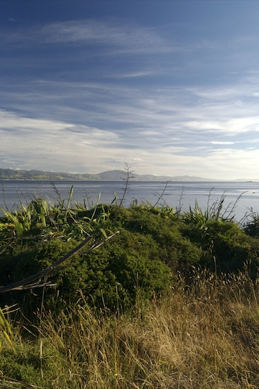 Nz kapiti island nature view solo partner see and do easy going