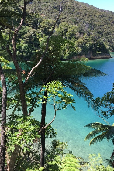 Nz queen charlotte sounds water bush iphone itinerary