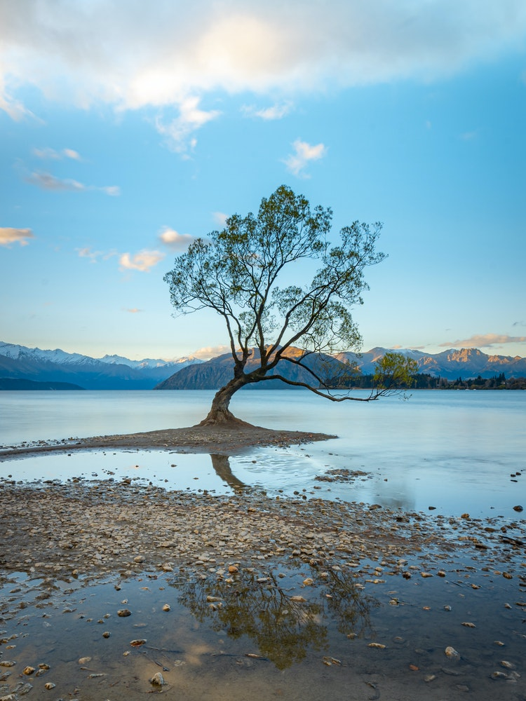 Wander around Lake Wanaka to spot 'That Wanaka Tree'