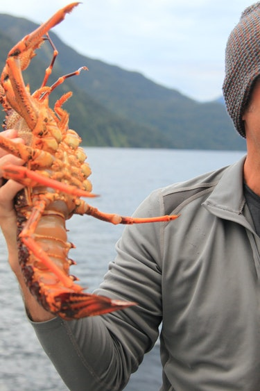 Nz doubtful sound boat fresh seafood solo see and do easy going