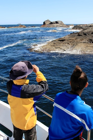 Nz doubtful sound boat seal spotting solo see and do easy going