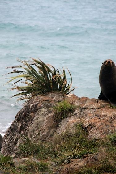 Nz swim with seals 3 solo adventure