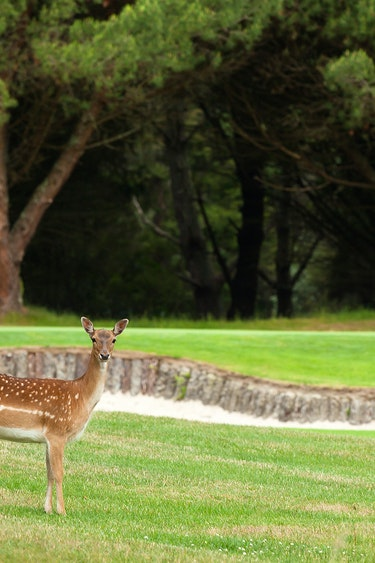 Nz wairaki golf course animals solo see and do active