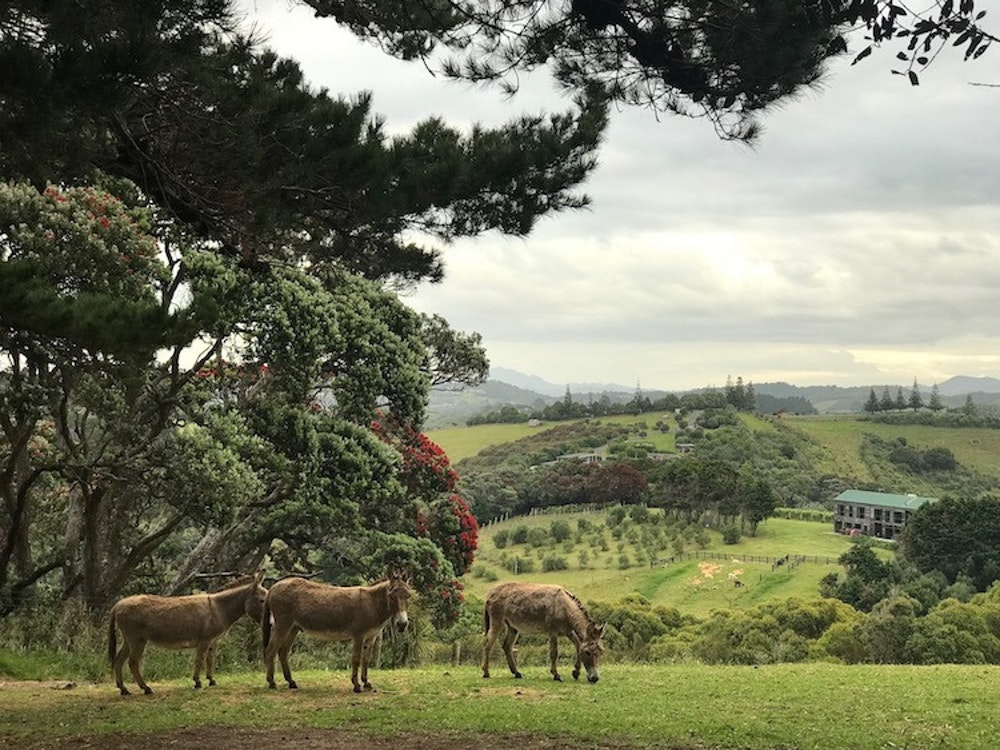 Donkeys grazing on the hill